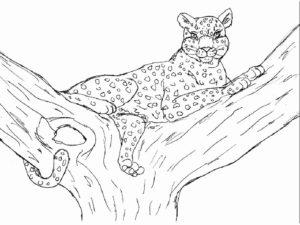 Леопард картинки раскраски (19)