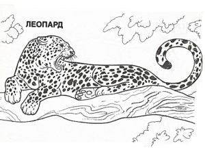 Леопард картинки раскраски (21)