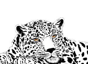 Леопард картинки раскраски (22)