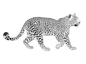 Леопард картинки раскраски (23)