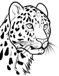 Леопард картинки раскраски (24)
