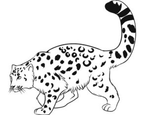 Леопард картинки раскраски (26)