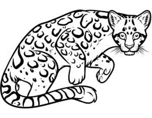 Леопард картинки раскраски (27)
