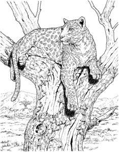 Леопард картинки раскраски (29)