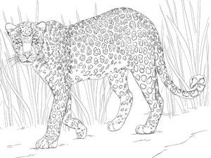 Леопард картинки раскраски (3)