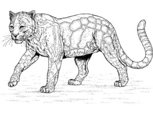 Леопард картинки раскраски (30)