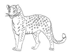 Леопард картинки раскраски (31)