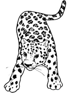 Леопард картинки раскраски (5)