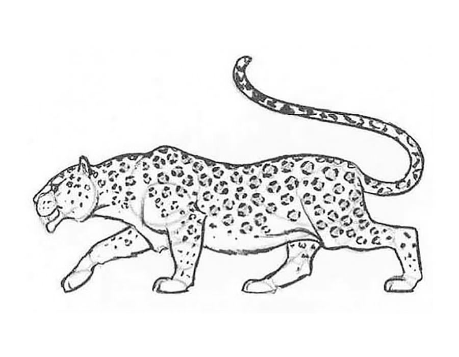 Картинки леопарда карандашом