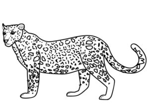 Леопард картинки раскраски (7)