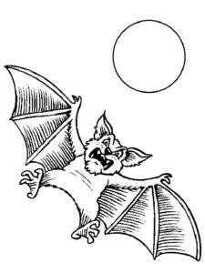 Летучая мышь картинки раскраски (10)
