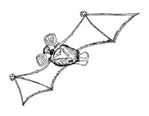 Летучая мышь картинки раскраски (12)