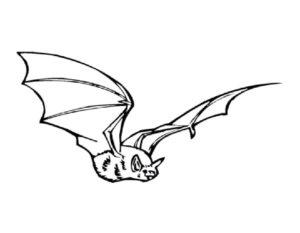 Летучая мышь картинки раскраски (15)