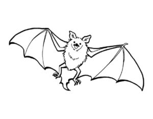 Летучая мышь картинки раскраски (16)