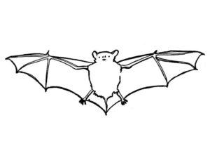 Летучая мышь картинки раскраски (17)