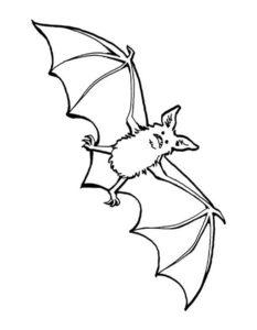 Летучая мышь картинки раскраски (18)