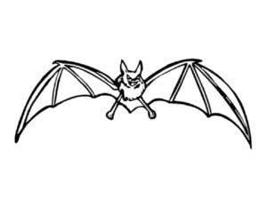 Летучая мышь картинки раскраски (19)