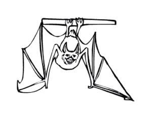 Летучая мышь картинки раскраски (20)