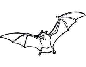 Летучая мышь картинки раскраски (21)