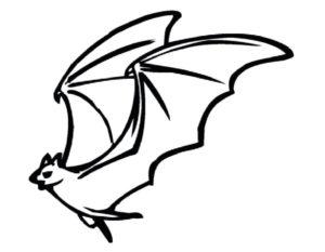 Летучая мышь картинки раскраски (22)