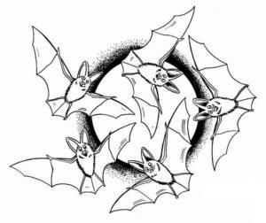 Летучая мышь картинки раскраски (4)