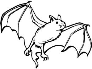 Летучая мышь картинки раскраски (6)