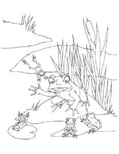 Лягушка картинки раскраски (15)