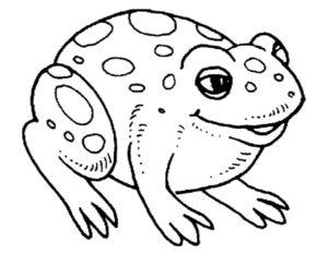 Лягушка картинки раскраски (21)