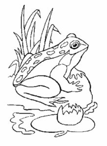 Лягушка картинки раскраски (23)
