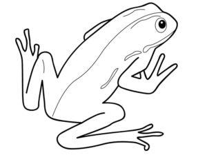 Лягушка картинки раскраски (46)