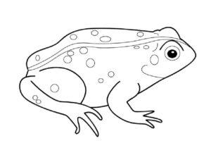 Лягушка картинки раскраски (47)