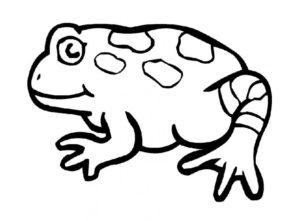 Лягушка картинки раскраски (48)