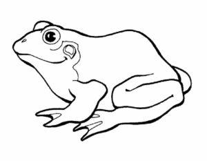 Лягушка картинки раскраски (53)