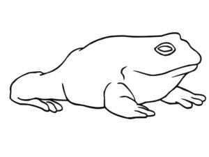 Лягушка картинки раскраски (68)