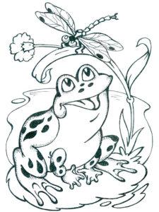 Лягушка картинки раскраски (74)