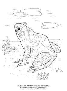 Лягушка картинки раскраски (9)