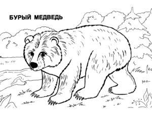 Медведи и мишки картинки раскраски (1)