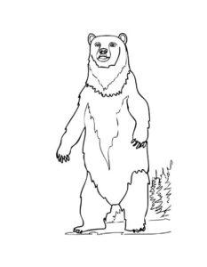 Медведи и мишки картинки раскраски (10)