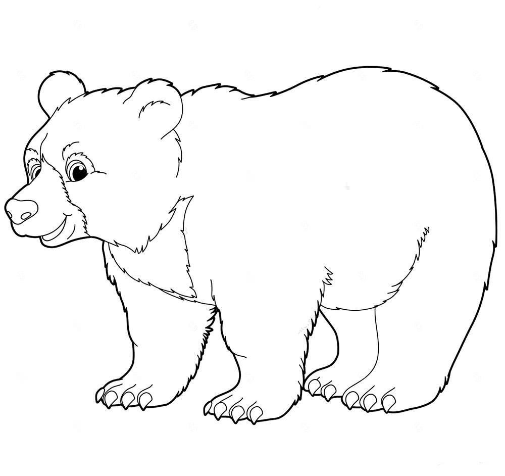 Медведи картинки черно-белая