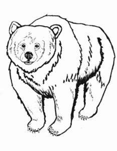 Медведи и мишки картинки раскраски (13)