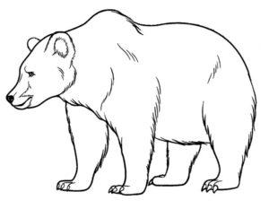 Медведи и мишки картинки раскраски (14)