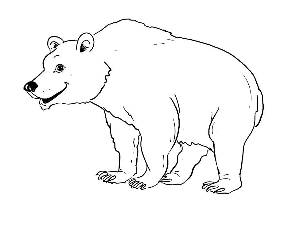 рисунок медведя для раскрашивания оаэ были