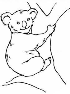 Медведи и мишки картинки раскраски (18)
