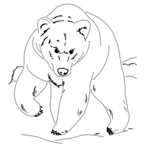 Медведи и мишки картинки раскраски (2)