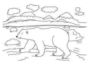 Медведи и мишки картинки раскраски (20)