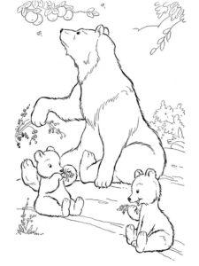 Медведи и мишки картинки раскраски (21)