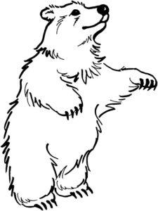 Медведи и мишки картинки раскраски (23)