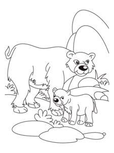 Медведи и мишки картинки раскраски (24)