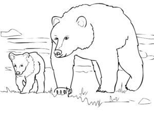 Медведи и мишки картинки раскраски (25)