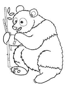 Медведи и мишки картинки раскраски (29)